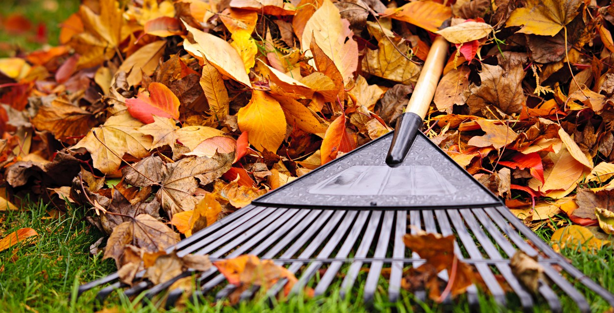 Leaves on green grass with a rake